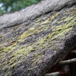 Thatch roof with moss — Stok fotoğraf