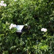 Security camera hidden in greenery — Stock Photo