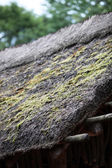Thatch roof with moss — Foto de Stock