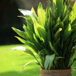 Stock Photo: Pot plant in garden