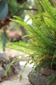 Leafy green fern — Stock Photo