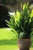 Topfpflanze in einem garten — Stockfoto