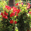 Colourful red summer flowers — Stock Photo