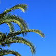 Green palm fronds against a blue sky — Stock Photo