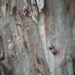 Background of tree bark — Foto Stock