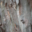 Background of tree bark — Stock Photo