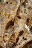 Background texture of gnarled knotty wood — Stock Photo