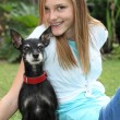 Stock Photo: Proud little miniature pinscher dog