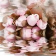 Pretty pink flowers reflected in water — Foto Stock