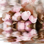 Pretty pink flowers reflected in water — Stock Photo