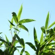 Tropical vegetation against a sunny blue sky — Stok fotoğraf