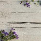 Modré květy na malovaných texturou dřeva — Stock fotografie