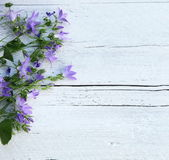 Side border of purple flowers on white wood — Stock Photo
