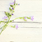 Delicate summer floral background — Stock Photo