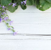 Border of green leaves and purple flowers — Stock Photo
