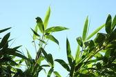 Güneşli mavi gökyüzü karşı tropikal bitki örtüsü — Stok fotoğraf