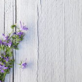 Bunch of purple flowers on white painted wood — Stock Photo