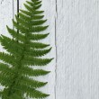 Green fern leaf on textured white wood — Foto Stock