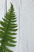 Green fern leaf on textured white wood — Stock Photo