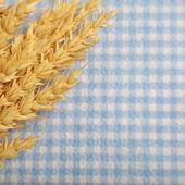 成熟的小麦的金耳朵 — 图库照片