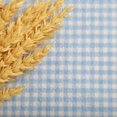 Ripe golden ears of wheat — Stock Photo