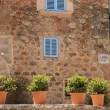 Row of ornamental potted plants — Stock Photo