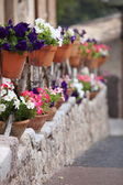 Row of colourful flower pots on a street — Stock Photo