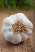 Bulb of fresh garlic — Stock Photo