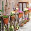 Stock Photo: Colourful flowers on a rustic wooden fence outside