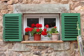 Vivid red geraniums on a windowsill — Stock Photo