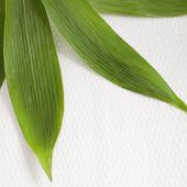 新鲜绿竹叶的细节 — 图库照片