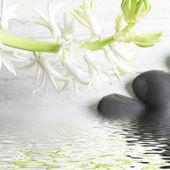 ładny kiść kwiaty białe wiosna nad wodą — Zdjęcie stockowe