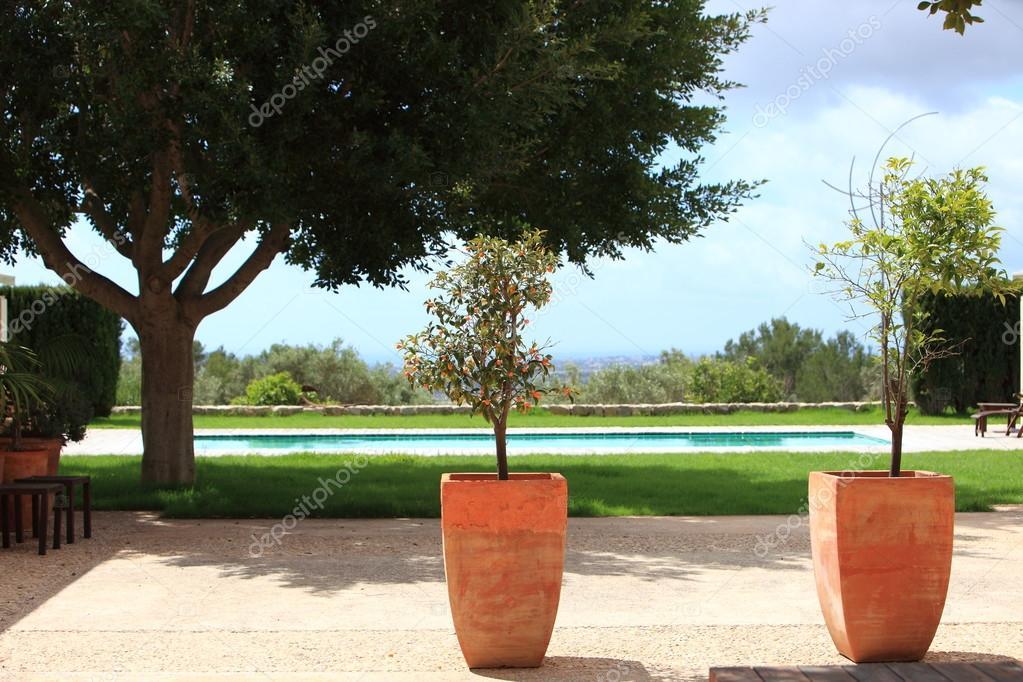 Giardino tropicale con piscina e piante in vaso foto for Vaso piscina