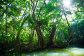 Lush green tropical vegetation alongside water — Stock Photo