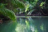 Tranquil lake with lush tropical vegetation — Stock Photo