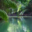 Stock Photo: Tranquil lake with lush tropical vegetation