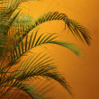 Stock Photo: Palm tree fronds against glowing orange wall