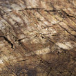 Old cracked wood background texture — Stock Photo #45295549