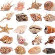 Shell collection — Stock Photo