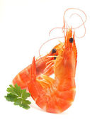 Fresh shrimps — Foto Stock