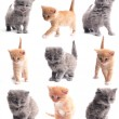 Stock Photo: Lovely small kittens on white background