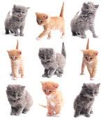 Adorable gatitos pequeños sobre un fondo blanco — Foto de Stock