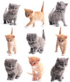 Lovely small kittens on a white background — Foto de Stock
