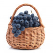Grape fruit — Stock Photo #31748851