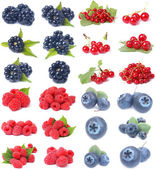 Berries collection — Stock Photo