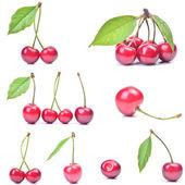 Frutta ciliegio — Foto Stock