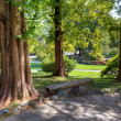 Stock Photo: Trees in valentino Park.