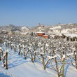 Snowy vineyards. Piedmont, Italy. — Stock Photo