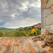 Cat on the wall. Piedmont, Italy. — Stock Photo