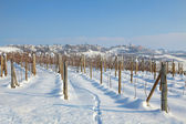 Vineyards under the snow. — Stock Photo